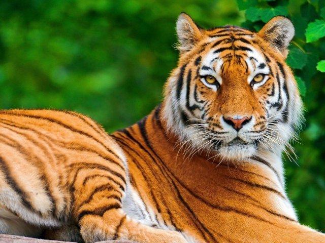 Qual animal mais se parece com você?