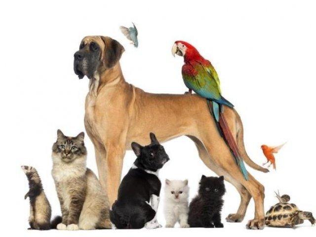 Qual seu animal de estimação ideal?