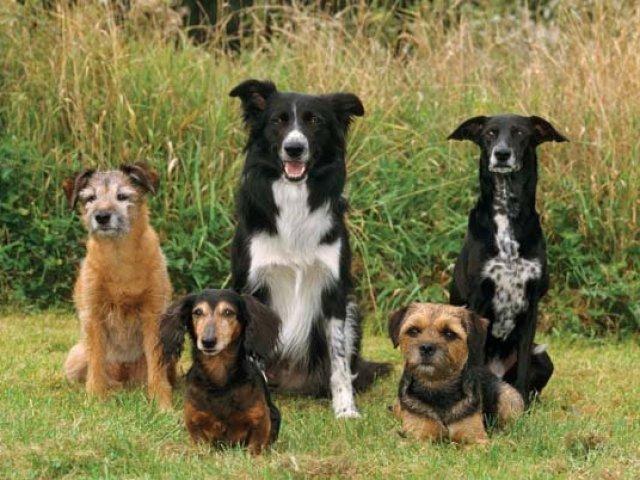 Você sabe tudo sobre as raças de cachorro?