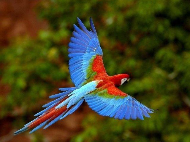 O que você sabe sobre os animais brasileiros?