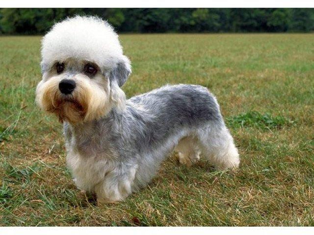 Top 10 raças raras de cães - Parte 2