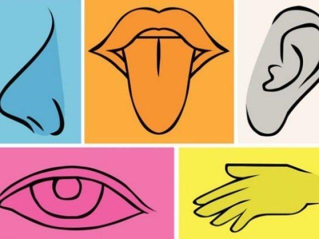 Qual é o seu sentido dominante?