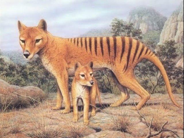 10 animais extintos desde o final do século XIX