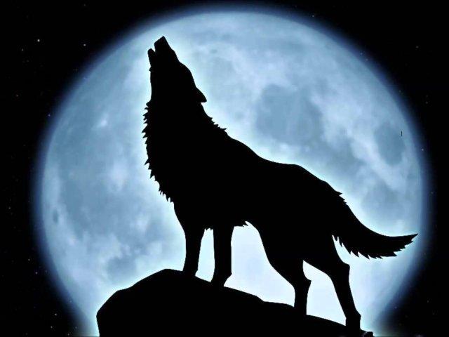 Você é um lobo solitário?