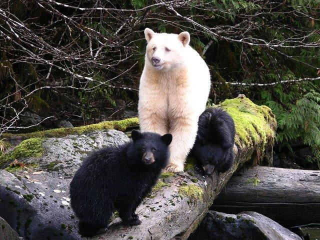 Ursos do mundo todo