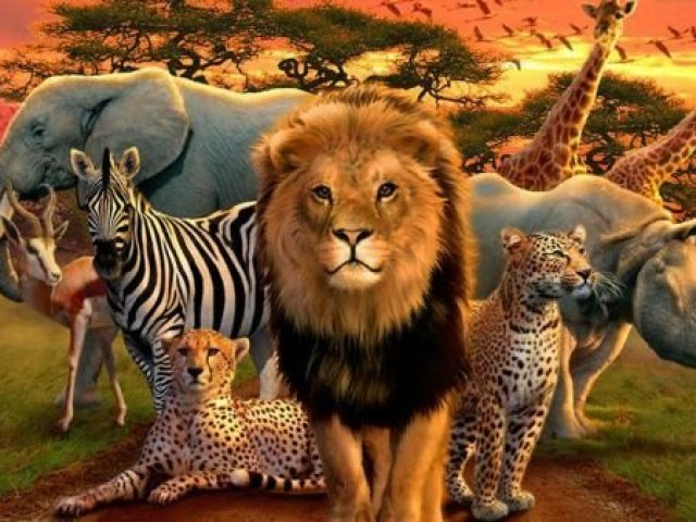 Qual animal selvagem mais combina com voc quizur - Bichos en casa fotos ...