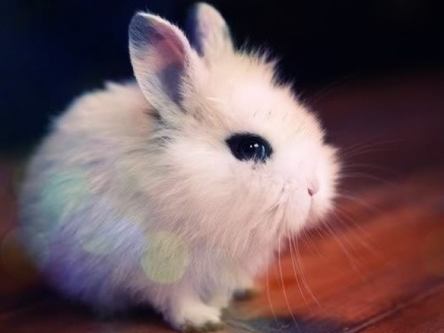 Favoritos Os 7 animais mais lindos e fofos do mundo!! | Quizur NS54