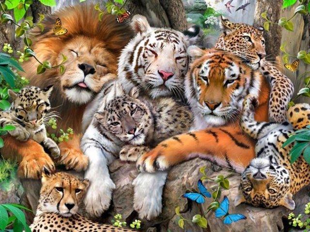 Qual seria sua função em um mundo de felinos? | Quizur