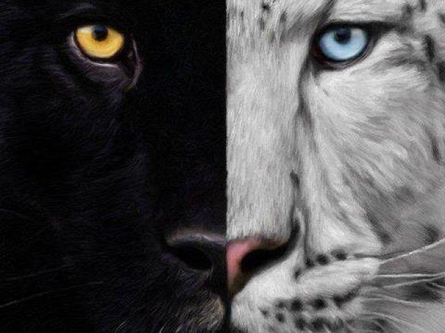 A Maldição Do Tigre Qual Seria O Seu Tigre Kishan Ou Ren Quizur