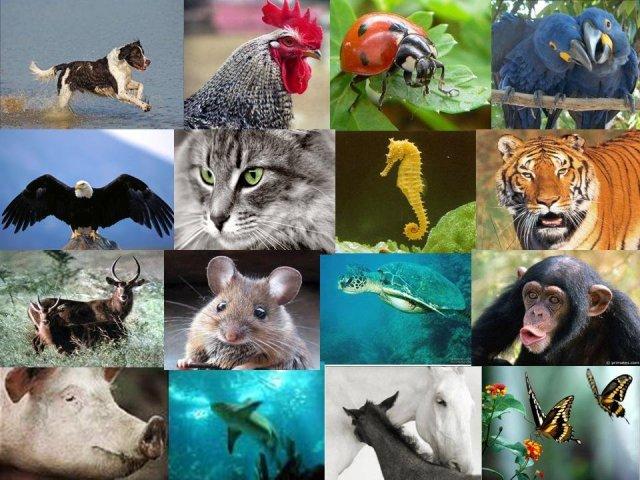 Você é descendente de qual espécie animal?