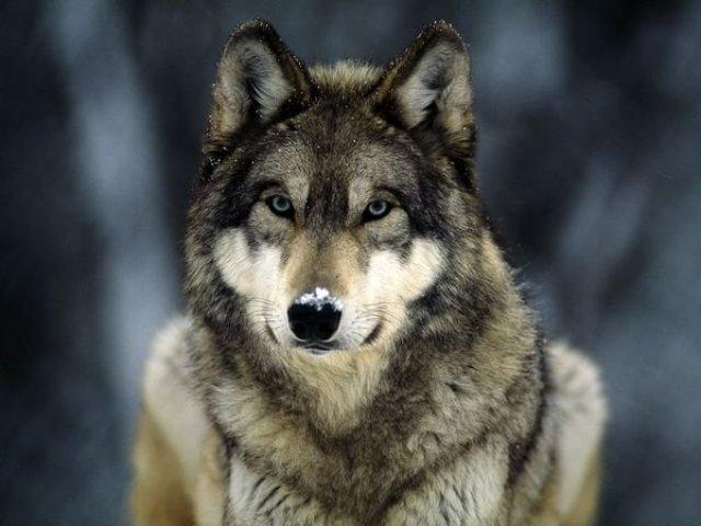 Os Animais Mais Bonitos Do Mundo Quizur