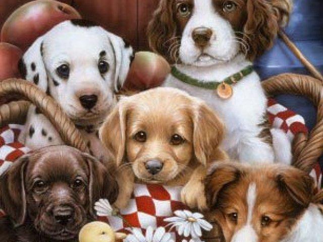 Quanto você é capaz de reconhecer raças de cachorro?