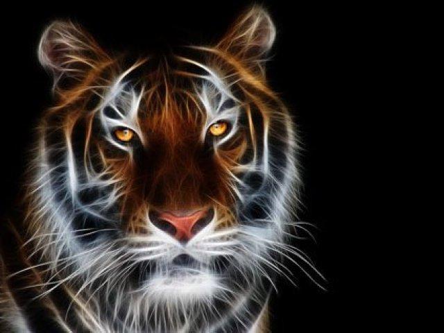 Qual animal vive em seu espírito?