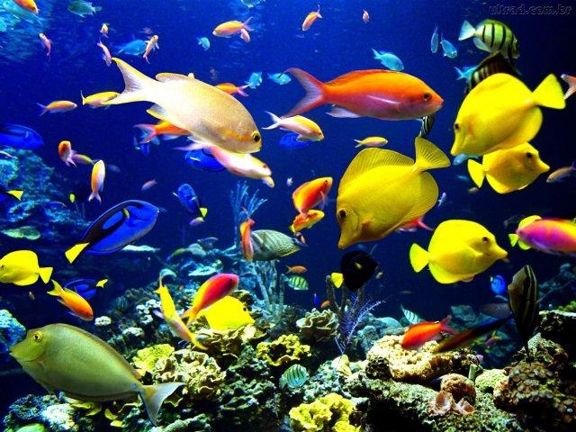 Qual animal aquático você seria?