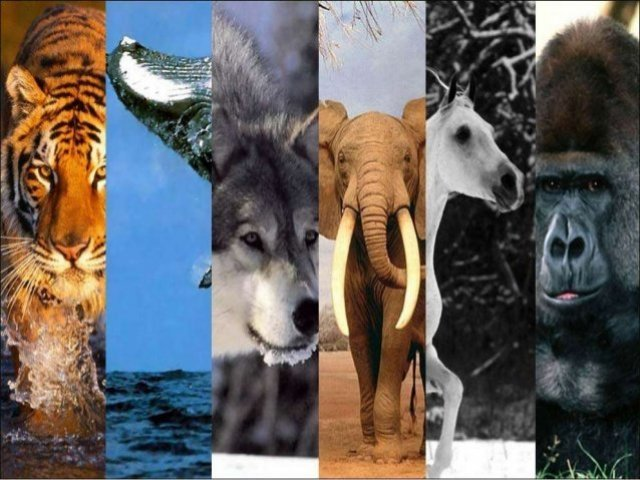 Qual mamífero você seria?