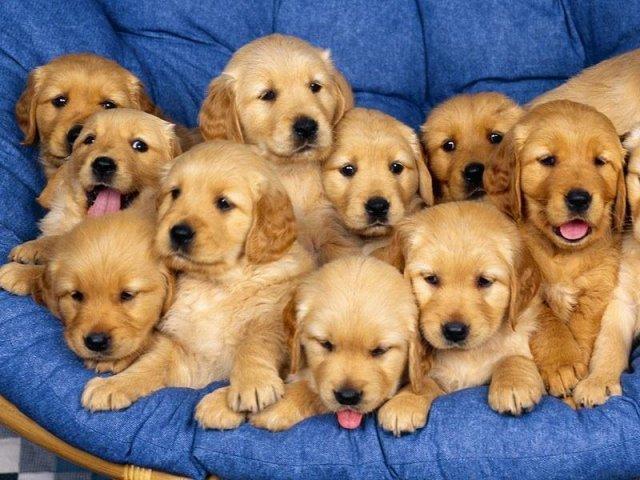 Qual raça de cachorro mais combina com você?