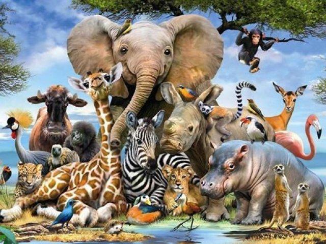 Que animal você foi na vida passada?