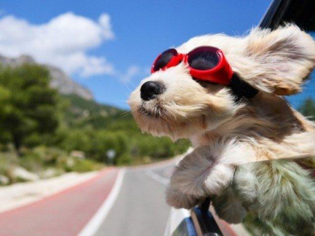 Planeje a sua viajem perfeita e diremos qual raça de cachorro combina mais com você
