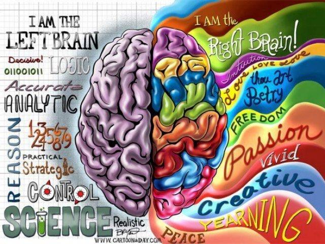 Qual lado do seu cérebro você mais usa?