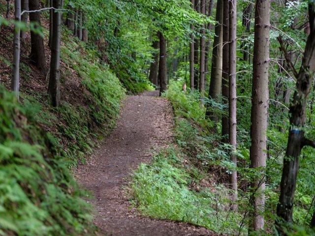 Que tipo de trilha combina com você?