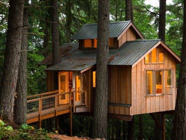 Como seria a sua casa na Árvore?