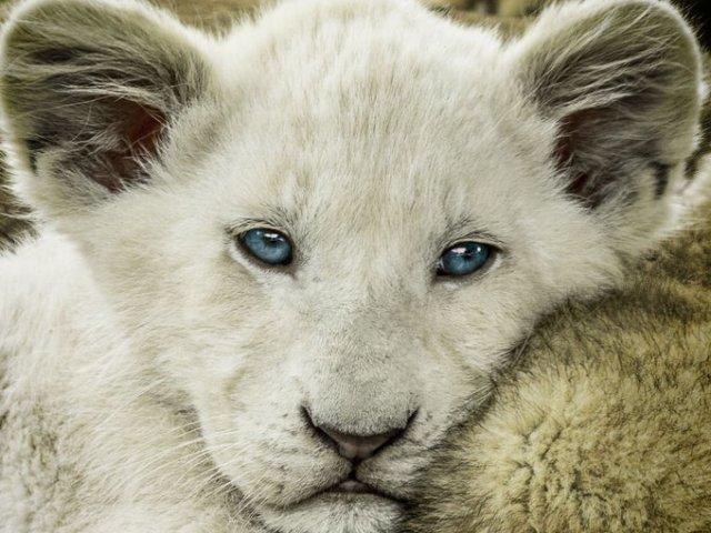 Teste de visão: Você tem a visão de qual animal?