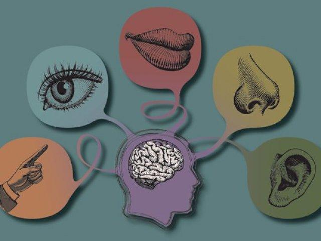 Qual dos seus sentido mais lhe influencia de acordo com suas respostas?