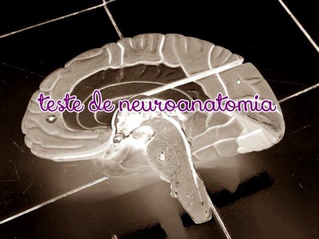 Neuroanatomia Prática