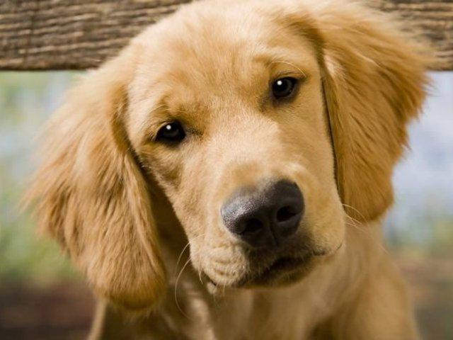 Qual é o seu animal de estimação ideal?