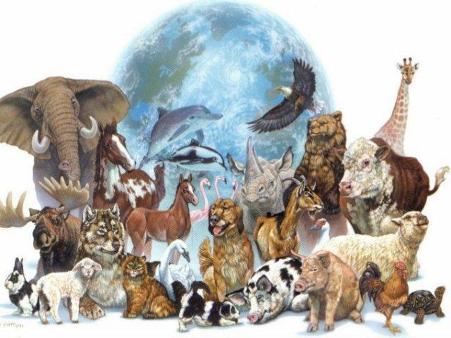 Quais são os nomes desses animais?