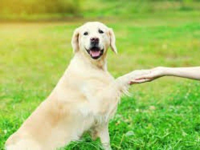 Qual raça de cachorro é ideal para você?