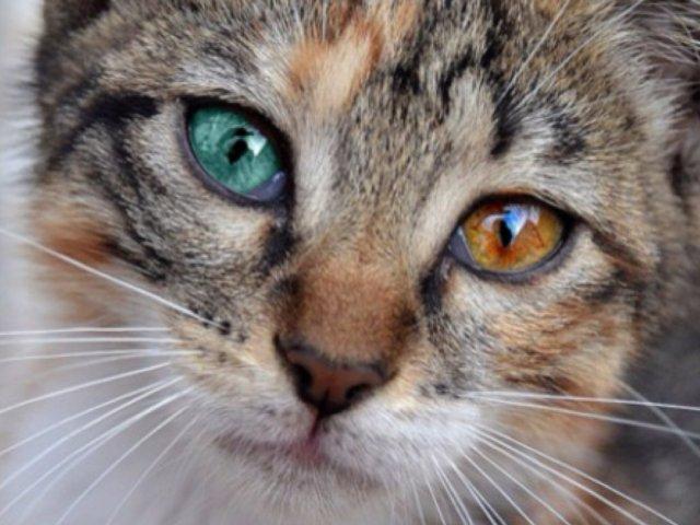 Qual animal tem a visão igual a sua?