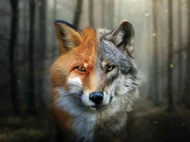 Tu és mais Lobo ou Raposa? | Quizur