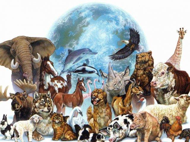 O quanto você sabe sobre animais?