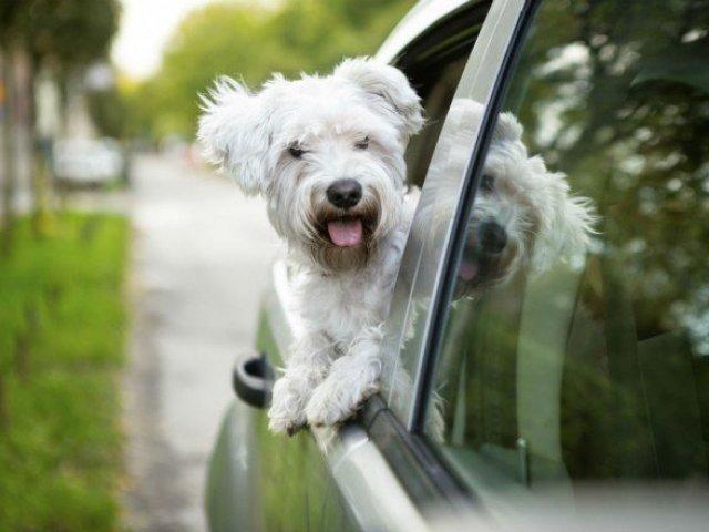 Qual o animal de estimação que mais combina com a sua personalidade?