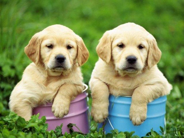 Qual raça de cachorro mais combina com a sua personalidade?