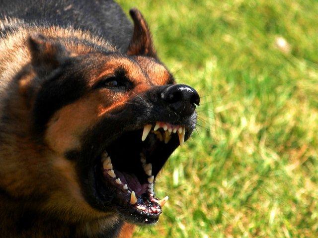 Em qual animal você se transforma no momento da fúria?