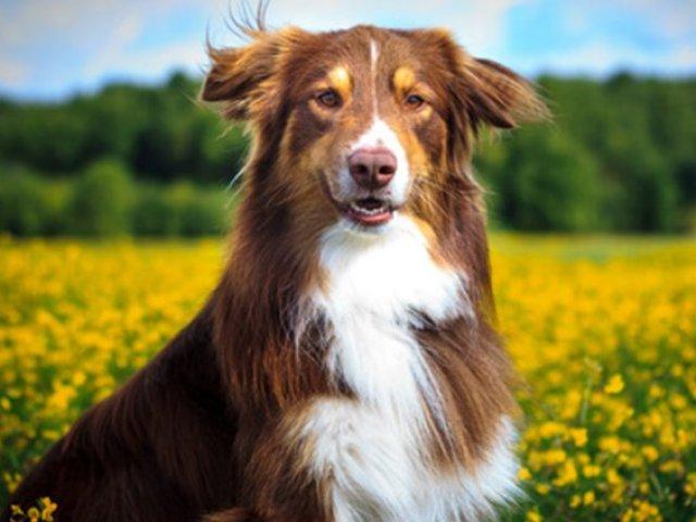 Qual o animal de estimação mais combina com a sua personalidade?