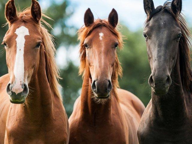 Qual raça de cavalo você seria?