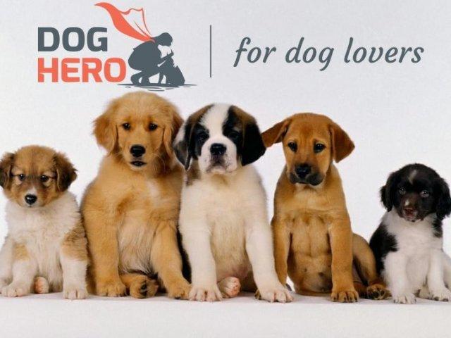 Que cachorro você seria?