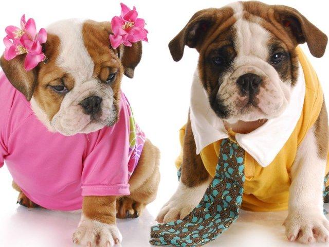 TOP 10 nomes mais populares para cães