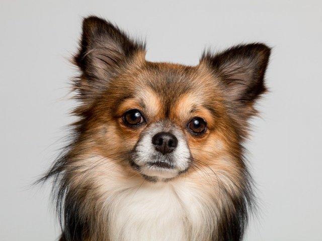 Será que você identifica essas raças de cachorros?