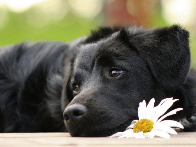 As 10 raças mais bonitas de cães