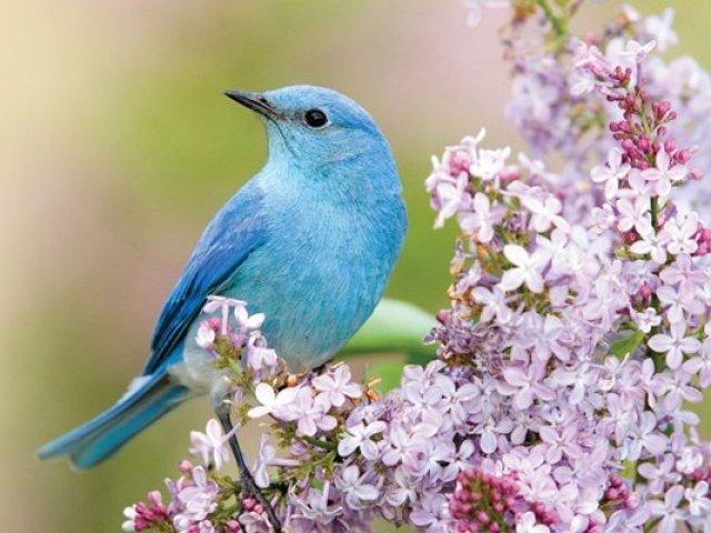 Qual ave você seria de acordo com suas respostas?