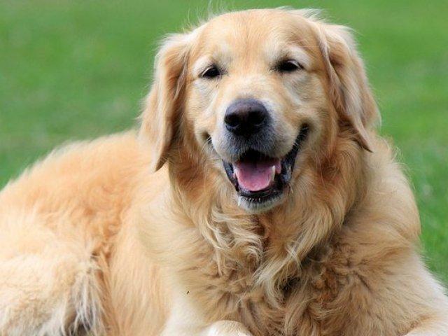 Qual raça de cachorro combina com você?