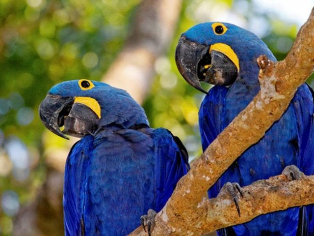 Será que você conhece os animais em extinção?