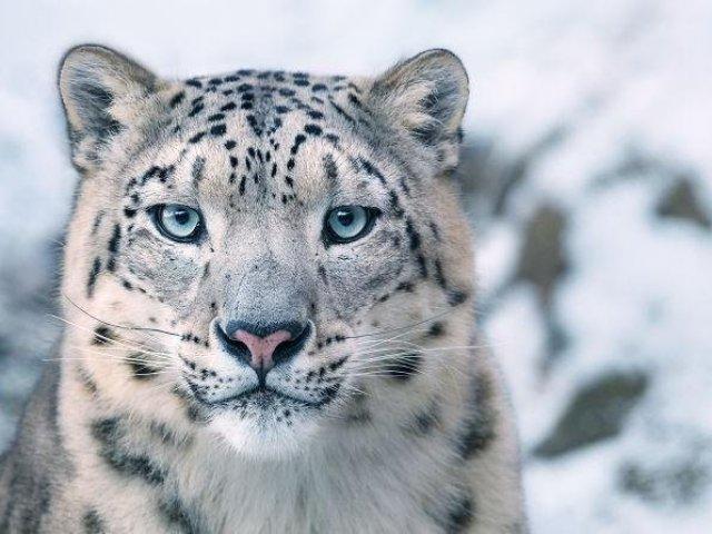 Qual animal te representa com raiva?