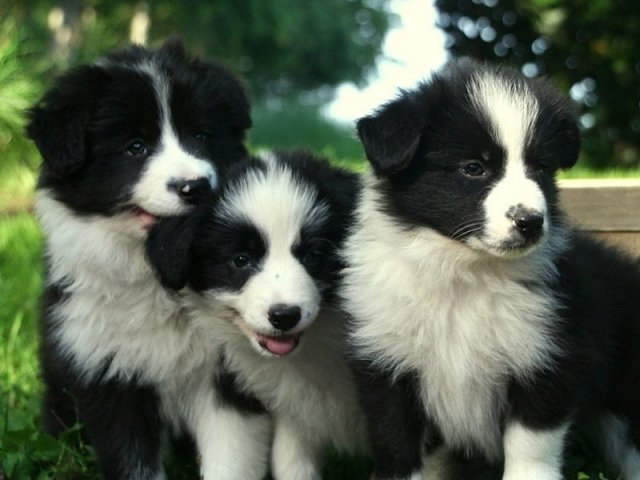 Qual raça de cachorro combina com a sua personalidade?
